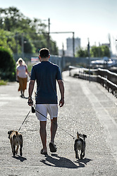 A dog walker in Leigh on Sea in Essex.