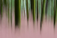 Dreamy forest, abstract photograph of the  Wuliangshan Nature Reserve, in Jingdong county, Yunnan Province, China.
