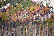 Capricious fire has burnt forest into patterns of life and death at Medicine Lake in Maligne Valley, Jasper National Park, Canadian Rockies, Alberta, Canada. Jasper is the largest national park in the Canadian Rocky Mountain Parks World Heritage Site declared by UNESCO in 1984.