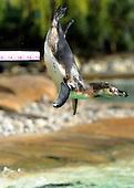 2012_03_29_Penguins_SSI