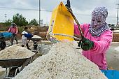 Salt Harvest in Samut Songkhram