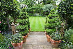 Topiary box spirals and bay standard balls around steps going from terrace to lawn. Stone lion statue as focal point
