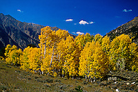 Fall foliage near Independence Pass, Colorado USA