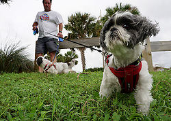 October 7, 2016 - Florida, U.S. - Mei Lin and PJ are walked by Jim Christ of Jensen Beach at Jensen Beach Boat Ramp Park on October 6, 2016.  Christ said, ''I think I needed to get out more than they did. (Credit Image: © Richard Graulich/The Palm Beach Post via ZUMA Wire)