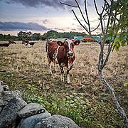 Kvällsbesök på Odvalds.<br /> PHOTO © Bernt Lindgren