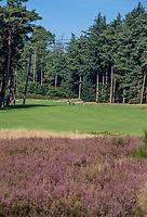 LEUSDEN  -  Hole 7 Golfclub de Hoge Kleij  COPYRIGHT KOEN SUYK