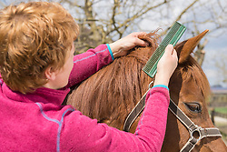 Woman combing horse's mane, Bavaria, Germany