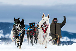 A friendly musher waves to well wishers along the trail at the All American Dog Derby in Ashton Idaho