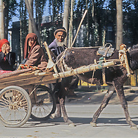 A Uygar husband, wife and daughter - who hides her face from the camera - ride a donkey cart to the Sunday bazaar in Kashgar (Kashi), a town on the ancient Silk Road in Xinjiang, China.