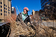 Spring Cutback on the High Line - March 4