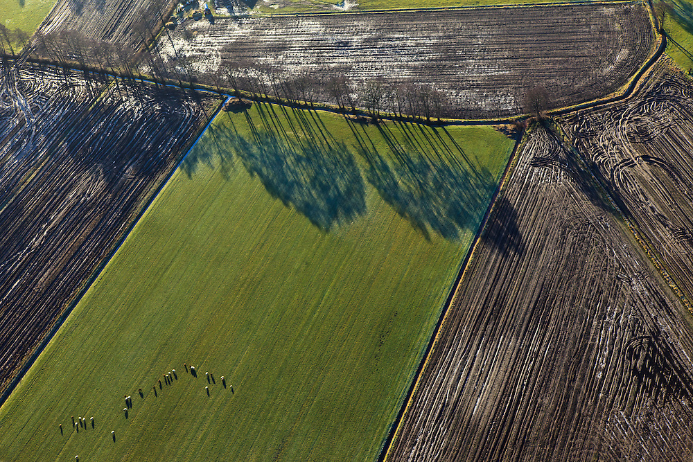 Nederland, Gelderland, Gemeente Barneveld, 20-01-2011. Geldersche Vallei, ten zuiden van Kootwijkerbroek intensieve veehouderij uitgereden en geinjecteerde mest. Patterns of tractor tires in the field after manuring the land. Cattle on the green meadow..luchtfoto (toeslag), aerial photo (additional fee required).copyright foto/photo Siebe Swart