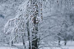 THEMENBILD - frischer Neuschnee liegt auf den zarten Lärchenästen , aufgenommen am 30. Dezember 2020 in Zell am See, Oesterreich // Fresh new snow lies on the tender larch branches in Zell am See, Austria on 2020/12/30. EXPA Pictures © 2020, PhotoCredit: EXPA/Stefanie Oberhause