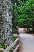 Trail of the Cedars, Glacier National Park.