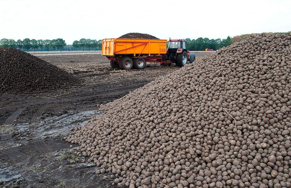 Nederland, Schoonloo, 19 okt  2011.Aardappeloogst in Drenthe..Volgens de boer was het een goed oogstjaar. Dit zijn fabrieksaardappelen..Foto(c): Michiel Wijnbergh