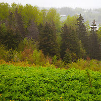 North America, Canada, Nova Scotia, Guysborough. A view of Guysborough with trees.