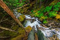 Grizzly Falls Zipline, Dyea, near Skagway, Alaska USA.