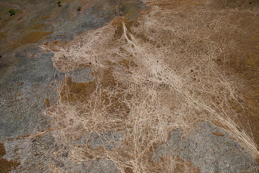 Cattle trails<br /> Savanna <br /> Rupununi<br /> GUYANA<br /> South America