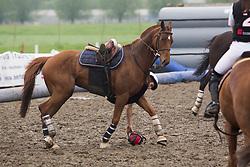 Augustyns Michael, BEL, Petite Biche, <br /> BK Horseball 2018<br /> © Sharon Vandeput<br /> 14:05:56