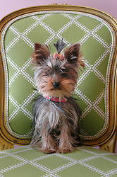 Lilly Pulitzer Pup. © The Charlotte Observer/L.MUELLER 2005