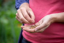 Sowing late crop vegetables - beetroot