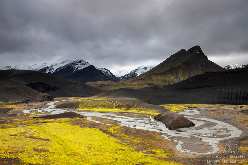 """Bright yellow lichen grows along a stretch of the river Jökulgulskvísl, which means """"glacial yellow fork,"""" in the southern highlands of Iceland."""