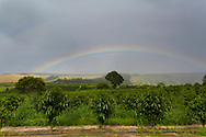pahala, big island, coffee, agriculture, farming, hawaii, tropical