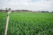 Israel, A sprinkler in a field