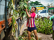 22 NOVEMBER 2017 - YANGON, MYANMAR: A worker unloads a load of bananas brought into Yangon on a truck before loading them onto a barge to take them into the interior of Myanmar. Myanmar's road system lags behind its neighbors in Southeast Asia and a lot of cargo is still moved by ships and barges.    PHOTO BY JACK KURTZ
