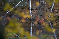 Autumn views at Walden Pond.
