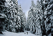 Snowshoeing with dog on trail around Trilliium Lake at base of Mt. Hood. Andrea Johnson