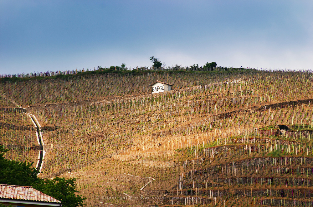"""Terraced vineyards in the Cote Rotie district around Ampuis in northern Rhone planted with the Syrah grape. With a tool shed painted white and the text """"Barge"""" (Gilles).  Ampuis, Cote Rotie, Rhone, France, Europe"""