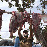 Rob Eldridge hangs freshly butchered mutton in Lupton Saturday in preparation to bring up to the Standing Rock North Dakota Pipeline Protest.