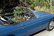 MG sports car with plants growing inside