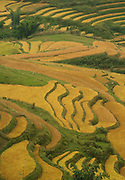 Rice field terraces near Tafen Village, Hill tribe town in Sa Pa region of Northern Vietnam