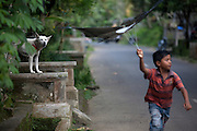 A dog barks at a young boy as the boy tries to fly a kite in Ubud on the island of Bali in Indonesia.