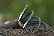 Garden fork in garden