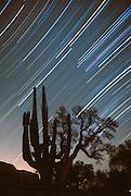 MEXICO, BAJA CALIFORNIA Star trails in sky above desert