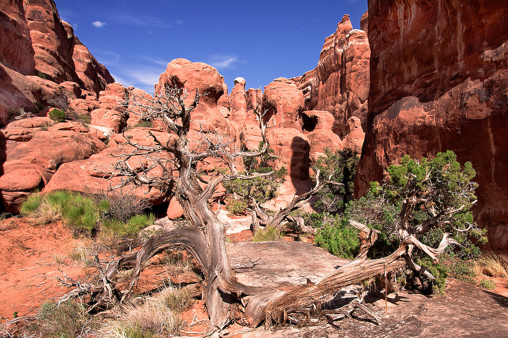 Fiery Furnace terrain.The Fiery Furnace is a collection of narrow sandstone canyons in Arches National Park in Utah, United States.