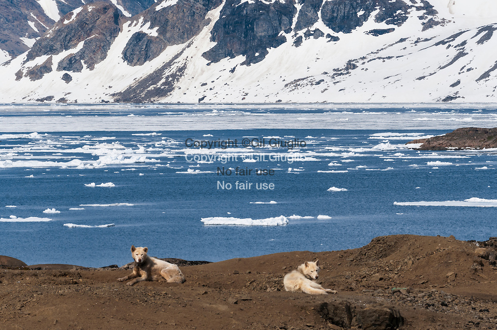 Groenland, sud est, région de Sermersooq, ville de  Kulusuk // Greenland, Eastern Greenland, region of Sermersooq, Kulusuk town