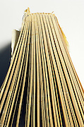 yellowed pages of old book