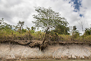 The bank of the river shows that between the dry and wet season there is a huge difference in the water level of the Rupununi river.