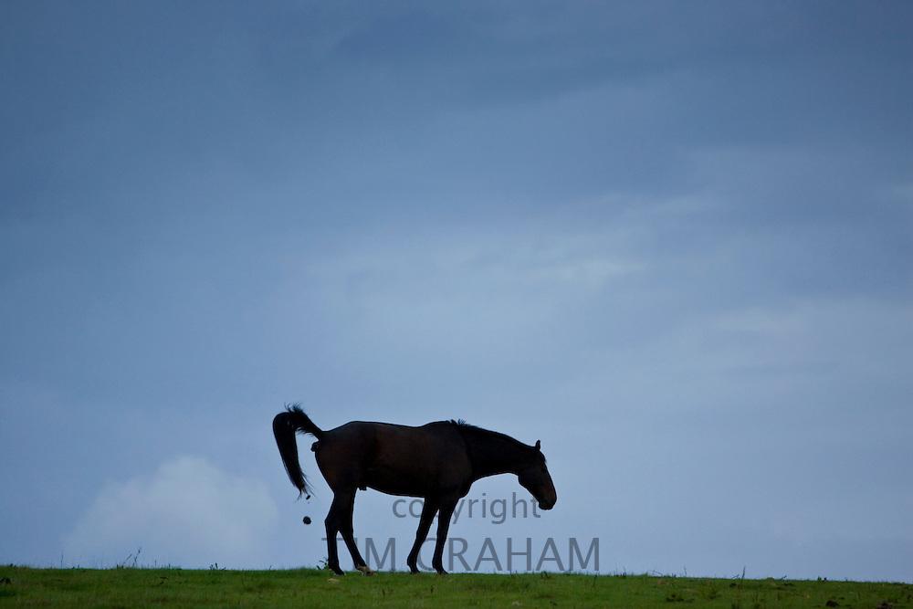 Horse excreting, Cirencester, Gloucestershire, United Kingdom