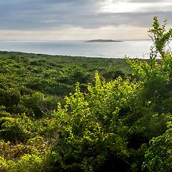 """""""Restinga (Vegetação) fotografado em Guarapari, Espírito Santo -  Sudeste do Brasil. Bioma Mata Atlântica. Registro feito em 2008.<br /> <br /> <br /> <br /> ENGLISH: Biome restinga photographed in Guarapari, Espírito Santo - Southeast of Brazil. Atlantic Forest Biome. Picture made in 2008."""""""