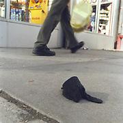 Black Child's Glove, Broadway between 102-103 Streets.