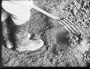 Bord Na Mona..1971..10.02.1971..02.10.1971..10th February 1971..Four images copied from Bord Na Mona Film..Image of gardener preparing a plot for planting. The plot was enriched using Bord Na Mona products.