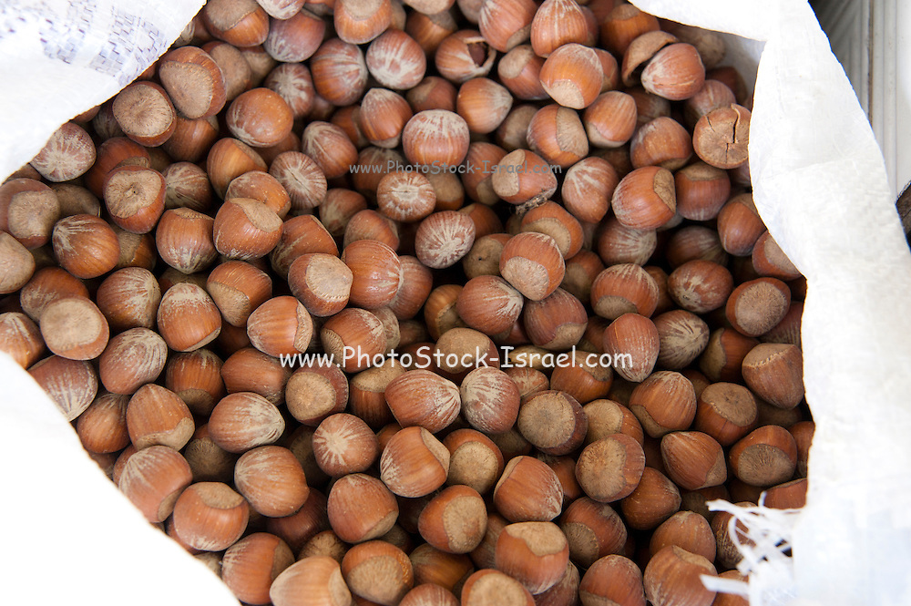 A pile of freshly roasted unshelled hazelnuts