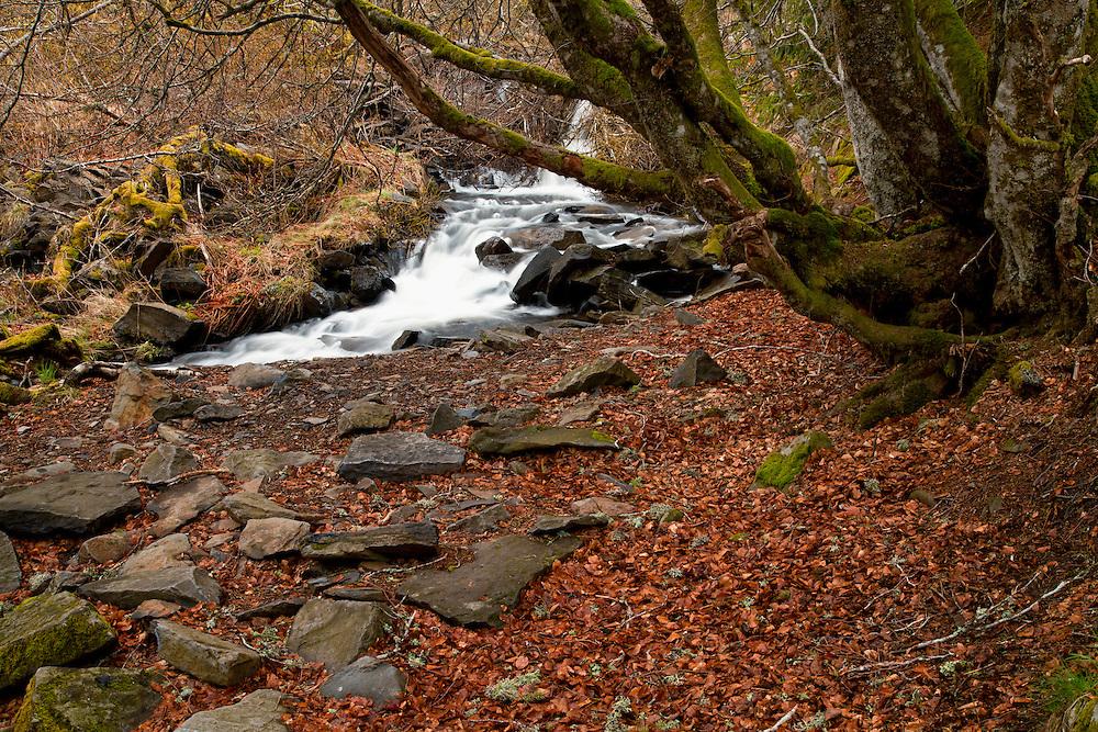Lower part Cascade de Guéry, Forêt Domaniale de Guéry, Massif d Sancy, Auvergne, France