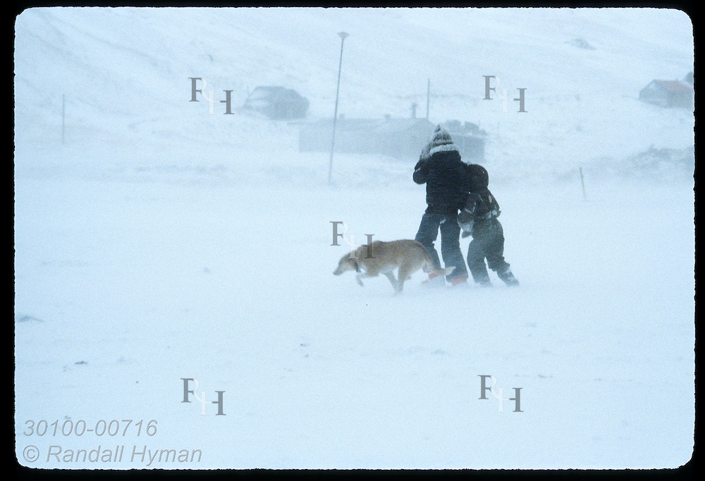 Two kids and dog struggle against wind and driving snow during January blizzard in Husavik. Iceland