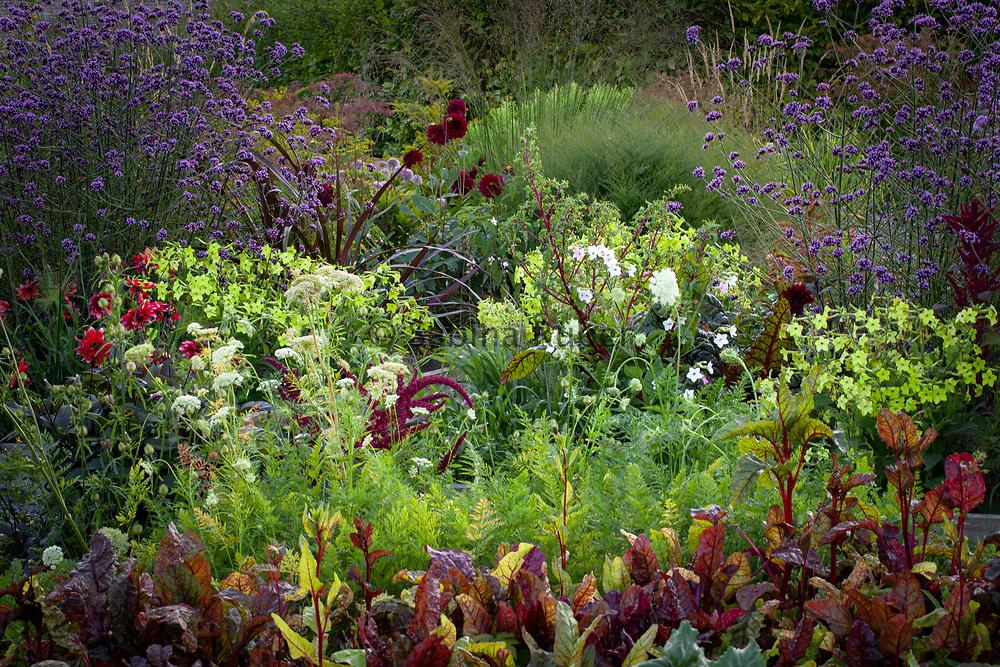 Dahlias, Nicotiana 'Lime Green', Beetroot, flowering Carrot and Verbena bonariensis ; Kitchen Garden, Wildegoose Nursery, Shropshire