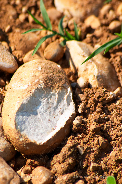 A split pebble showing the very white rock type. Typical red reddish clay sand sandy soil mixed with pebbles rocks stones in varying amount. Vineyard on the plain near Mostar city. Hercegovina Vino, Mostar. Federation Bosne i Hercegovine. Bosnia Herzegovina, Europe.